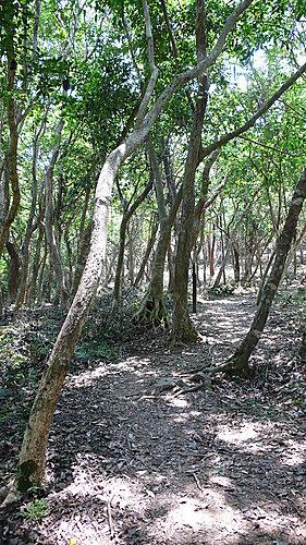 朝陽國家步道 - 南澳鄉 5