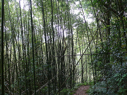 20080525-霞喀羅古道-Day1-3 97