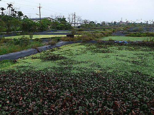 20080224-勝洋水草休閒中心