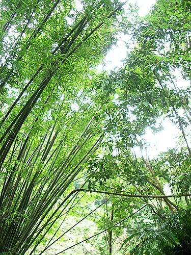 20060529-宜蘭之旅(林美石磐步道) 13