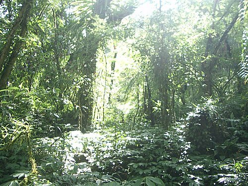 20051113-松羅步道 37